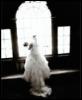 wedding in windo