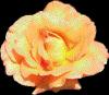 rosewateringlet userpic