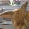 bunny, Barley, bunnies