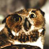 owl_get_you userpic