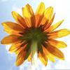 anita812 userpic