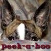 Kelpie: peek-a-boo