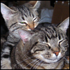 Cats - Sora and Nefer