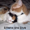 kittens are love