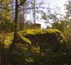 Aurinko, Luonto, Metsä