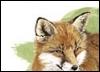 chinese_fox userpic