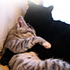 kitties snuggle