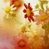 pink_raindrops userpic