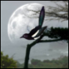 magpiefever userpic