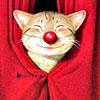 кот смешной