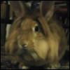 fannishliss: bunny!