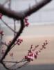 vetka_sakura userpic