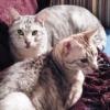 kittens that i love