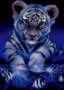 nermal_tiger userpic