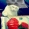 Mr. Dr. Grumpy Mister, M.D. aka the Twelfth Doctor: Sushi kitty is FIERCE!