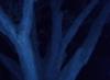 sequoiatree userpic