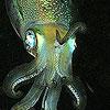 neuroticsquid userpic
