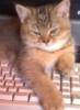 oovda: cat