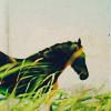 stock: black horse