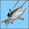 frickin, shark, lasers