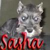April: Sasha