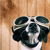 Michelle: Stock - Doggles