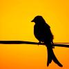 Jacqueline: ms bird silhouette