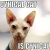 CynicalCat