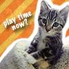 Dart - Play Time