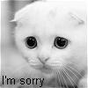 flingslass: Im Sorry Cat