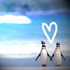 Mikes_Penguin