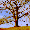 propiavoz: penelope; tree