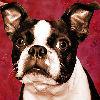 xpink_bunnyx userpic