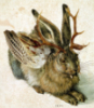 judith: non-fluffy bunny
