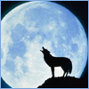 mysteriouswolf1 userpic