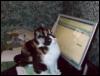 ani_no_mouse userpic