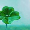 Juri Anne: flower - clover