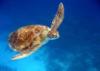 Записки Счастливой Черепахи