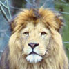 pat_le_lion userpic