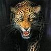 salva_res_ast userpic