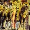 justice cheetah