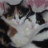 Cats - Charlotte & Elsie