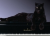 blackcat_153 userpic