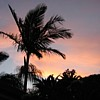 sunray45: Palm Tree Sunset