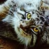koshka_nakryshe userpic