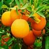 apelsinka555 userpic