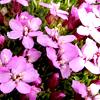 xflowers