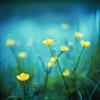 pyroblaze18: Misc.: Flowers - teal mist