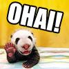 LOL | OHAI | Panda
