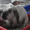 bunnyhero userpic